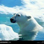 """Лучшие фотографии из архива журнала """"National Geographic"""""""